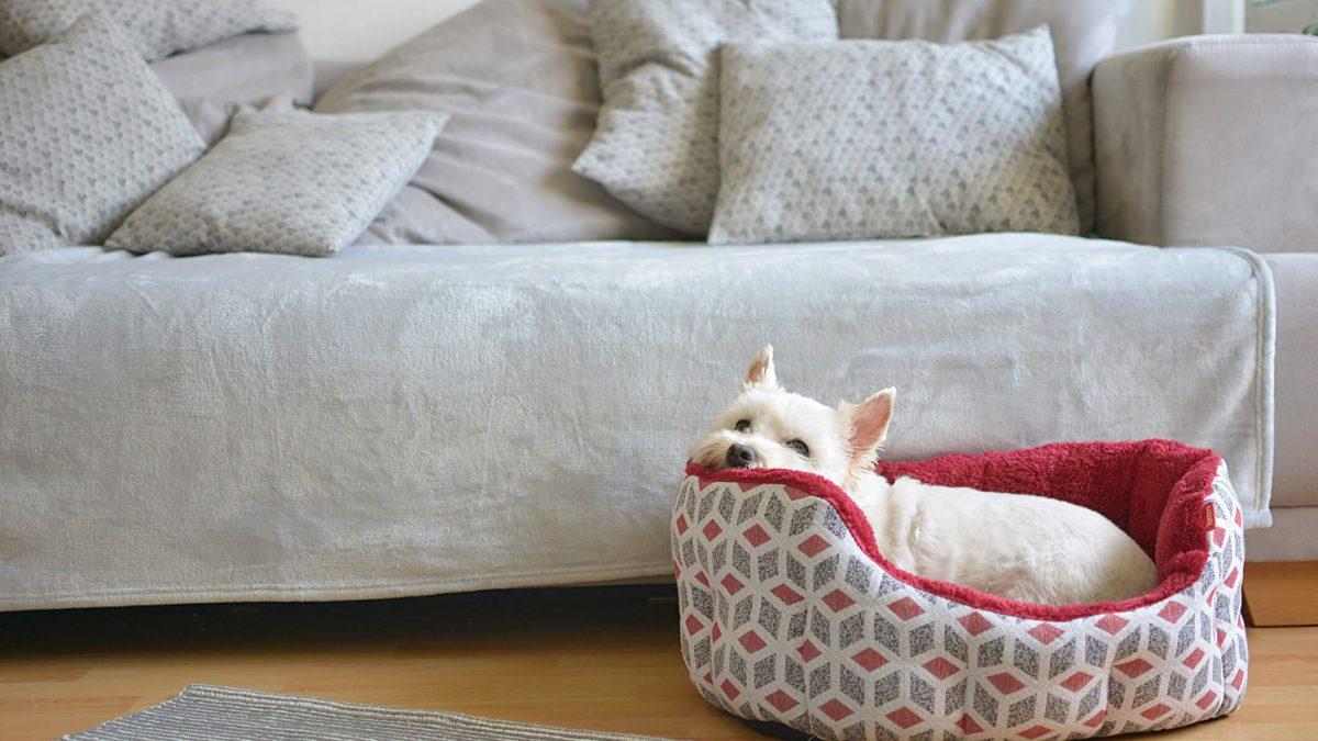 Como criar um espaço aconchegante para animais em apartamento?