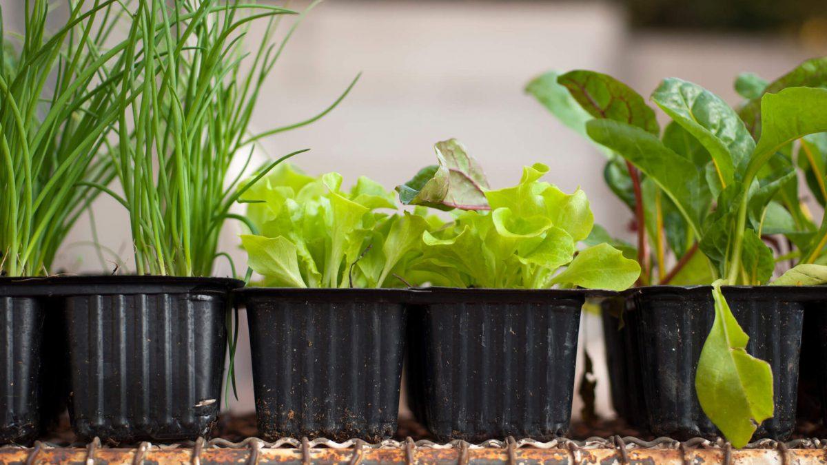 Passo a passo: aprende agora como fazer uma horta em casa incrível