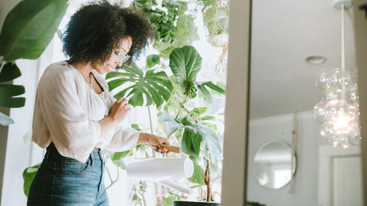 Como usar plantas na decoração de forma mais harmoniosa?